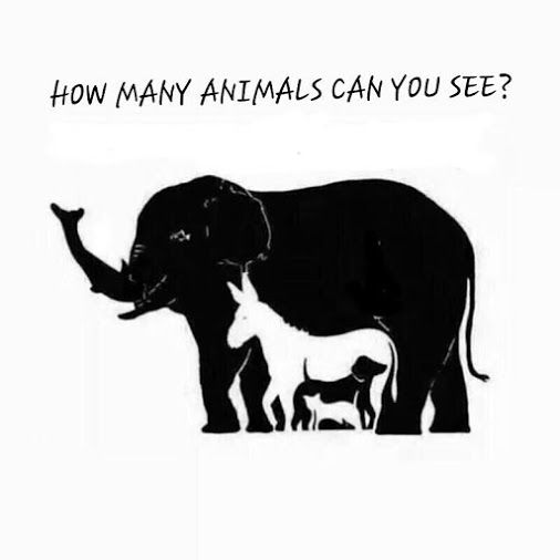 How many Animals can you see