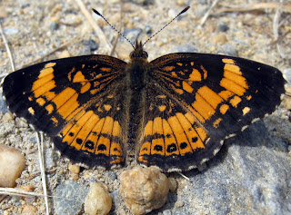 A butterfly in Elk Neck State Park
