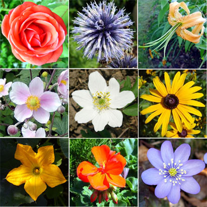 different types of flowers and their names, Beautiful flower