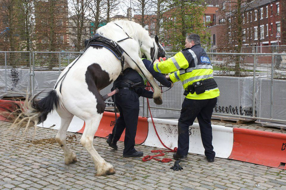 Wird von pferd genommen frau Eduard der