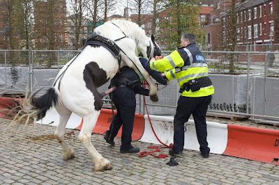 pferd fickt oder besteigt einen Polizisten in Holland. Mit einem enormen Penis.