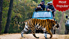 Golden Triangle Tours with Tiger Safari - 07 Nights / 08 Days