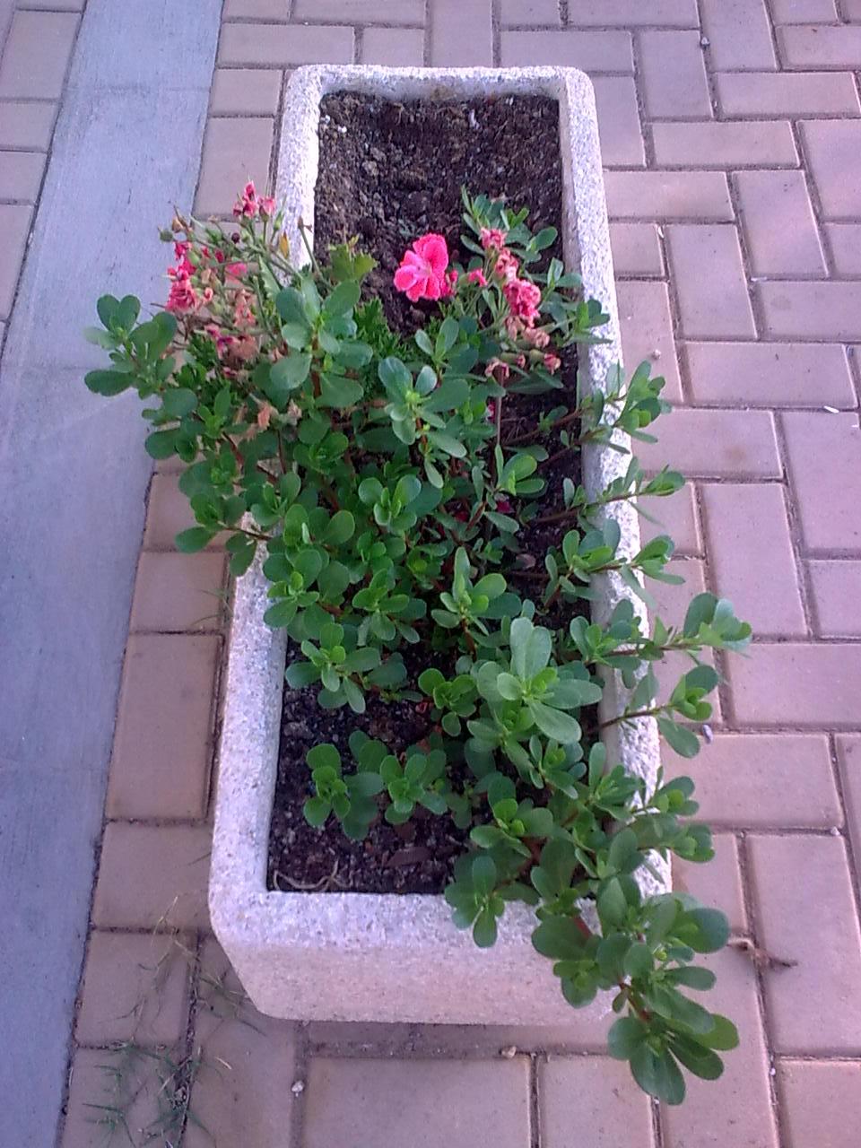 Moncofa y sus tradiciones algunas jardineras de moncofa for Que plantas poner en una jardinera