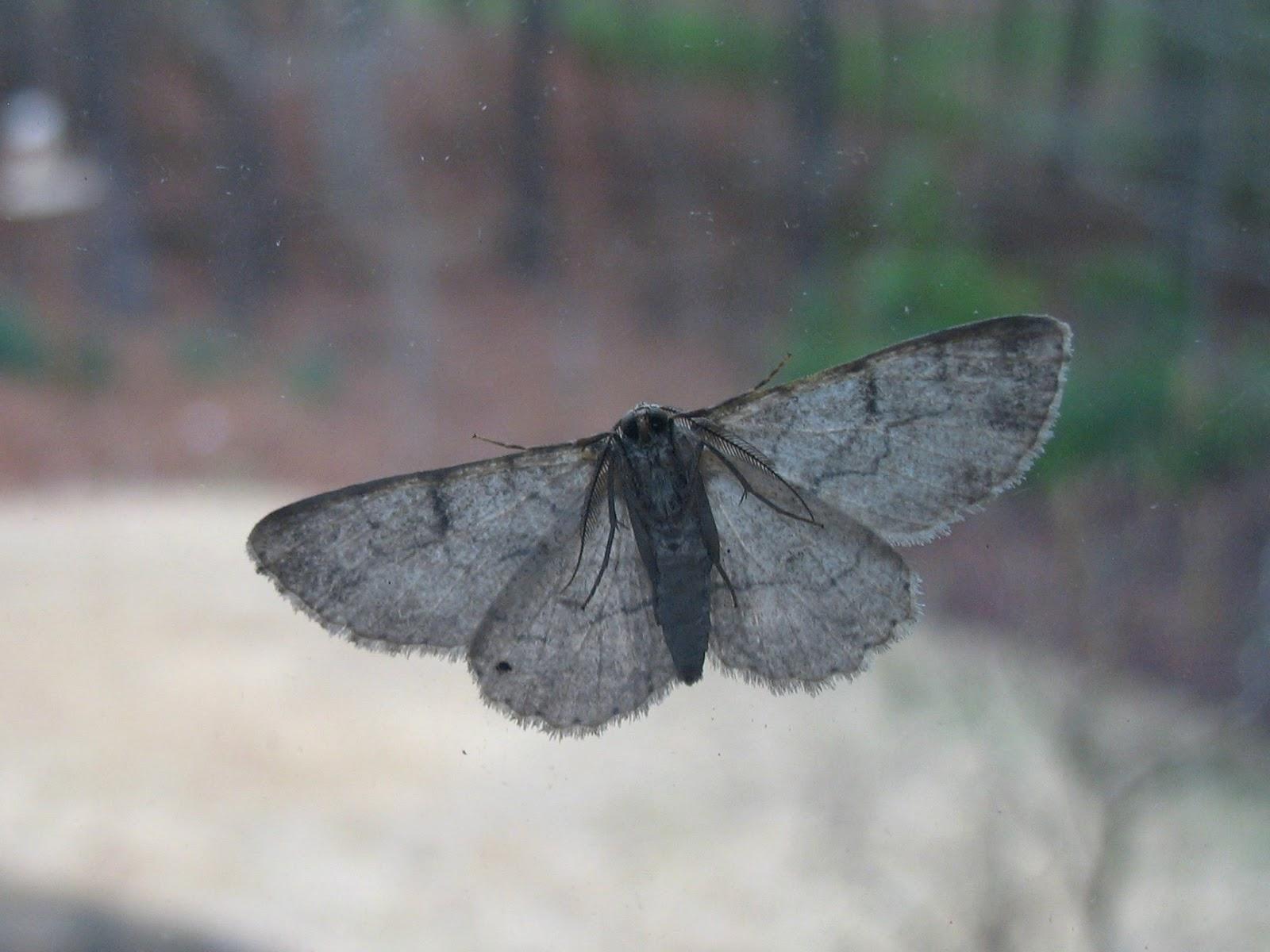 butterflies and moths book   eBay