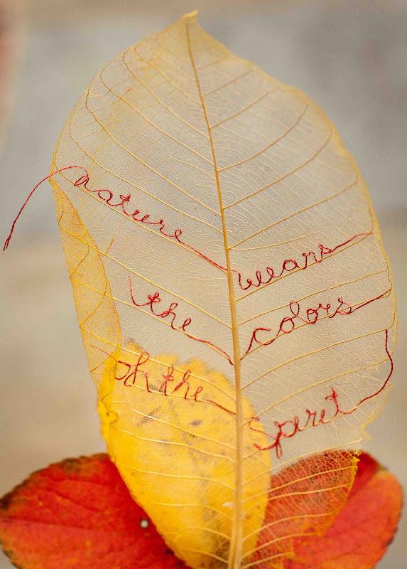 Leaf+message 0007+lo