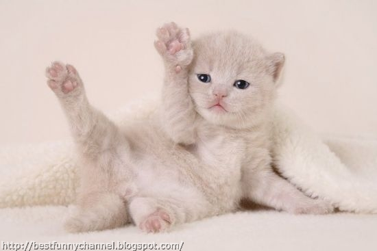 Funny kitten 2.
