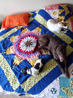 puppies on Lone Star Quilt