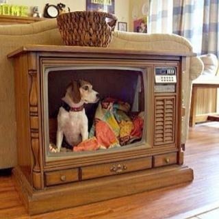 C Mo Hacer Una Casa Para Perro Con Recicla Inventa
