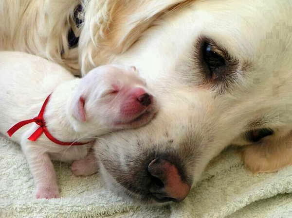 Cute dogs - part 3 (50 pics), dog and her newborn puppy