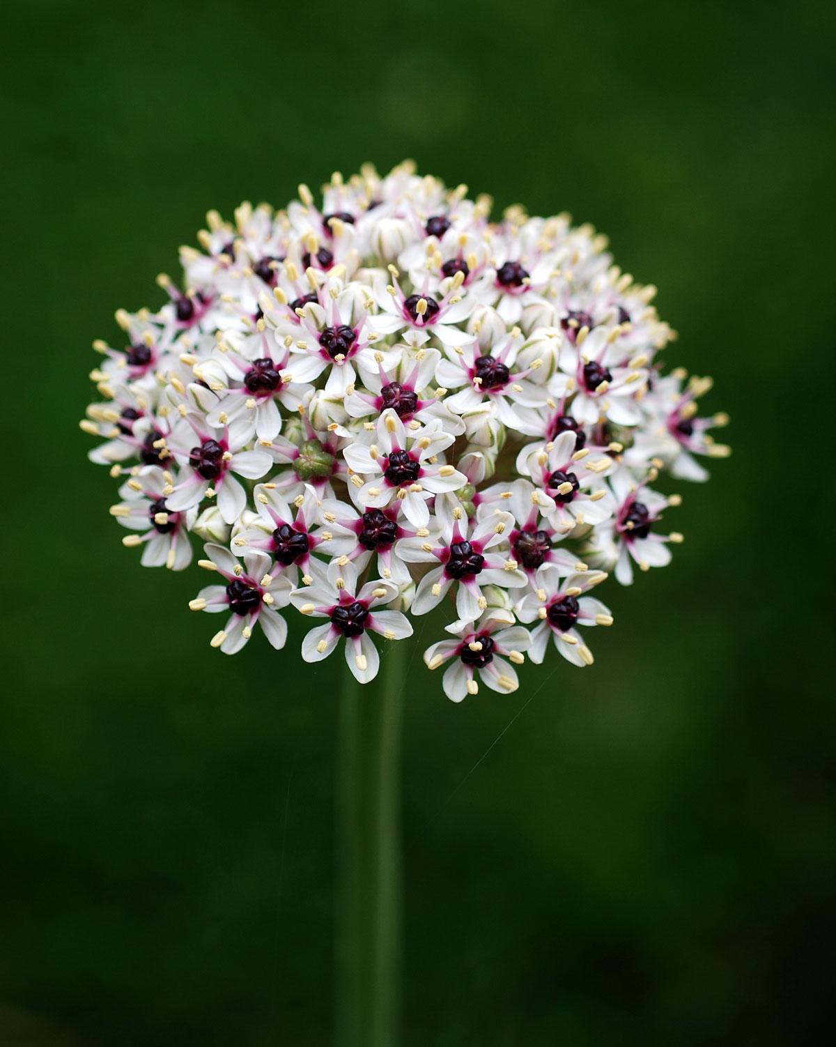 Il mondo in un giardino fiori di maggio for Fiori da giardino autunnali