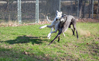 Blue and Bettina greyhound-racing foul?