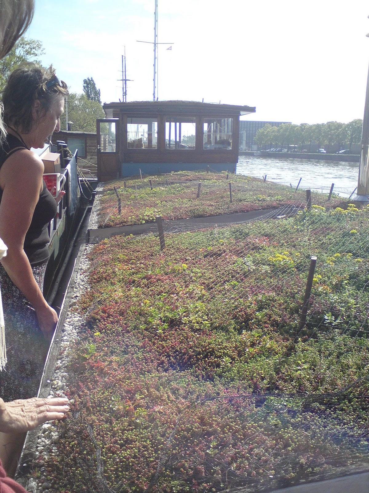 Releaf trädgård: oktober 2011