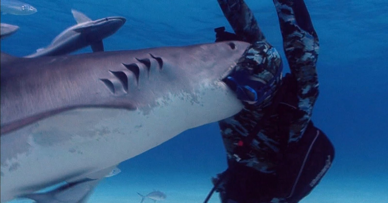 10 Most Dangerous Sharks  All About Wildlife