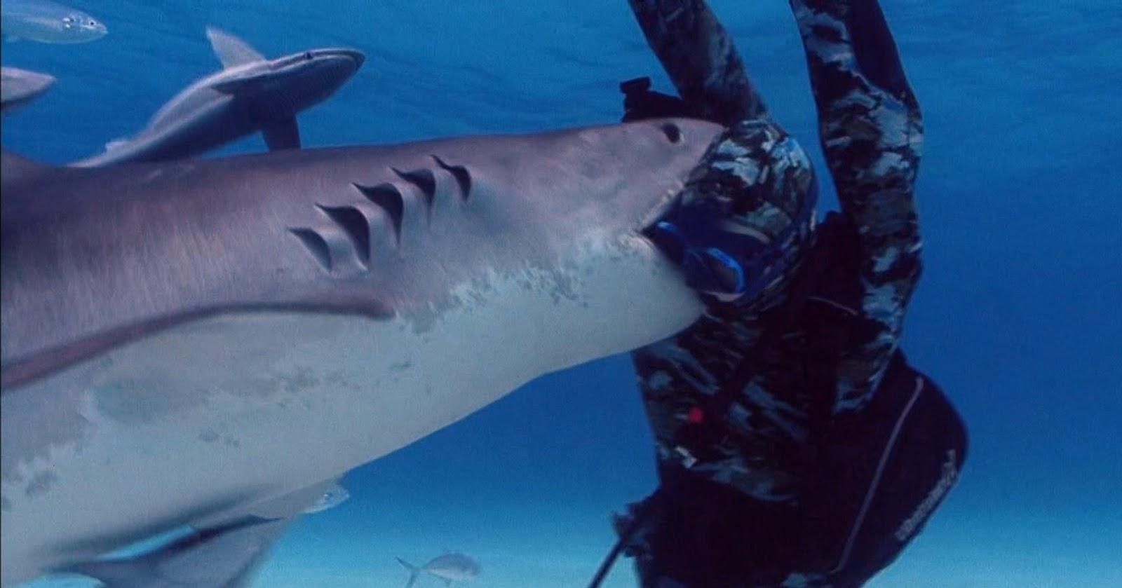 Greenland Shark - Life...