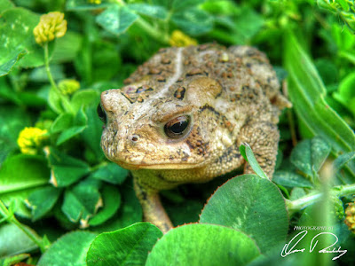 toad toads frog frogs nature outdoor outdoors