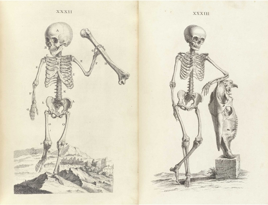 Morbid Anatomy: The Wonderful Public Domain Review Needs Your Help!