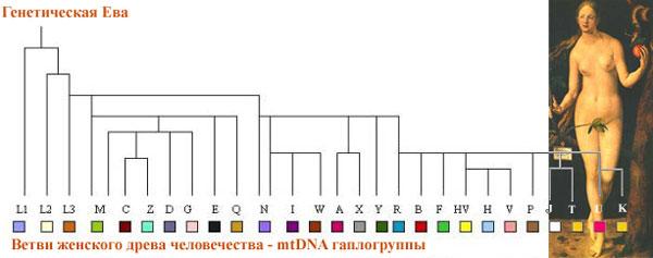 Митохондриальная ДНК  и семейная история