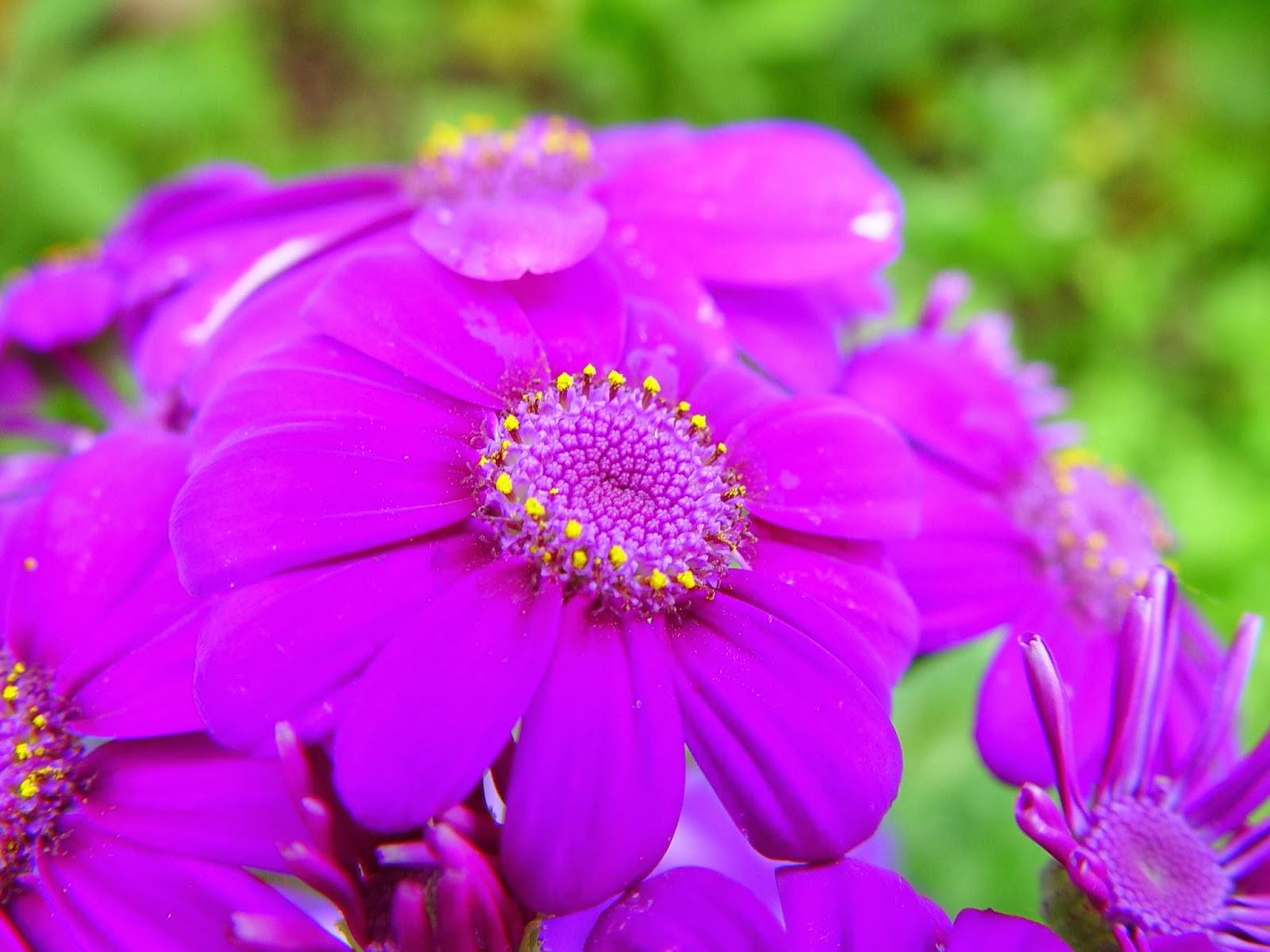 bright flower wallpaper beautiful desktop wallpapers 2014