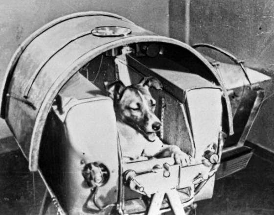 Laika the dog, onboard Sputnik II (1957).