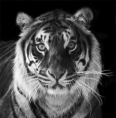 tiger fractal cats e - photo #27