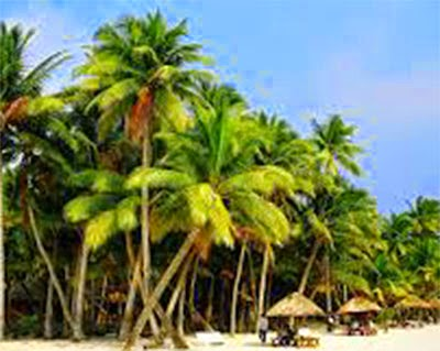 Sri Lanka to open Coconut Park to promote tourism in the East Sri Lanka
