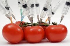 Que son los alimentos Transgénicos?