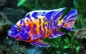 JOE'S AQUAWORLD FOR EXOTIC FISHES MUMBAI INDIA 9833898901 ...