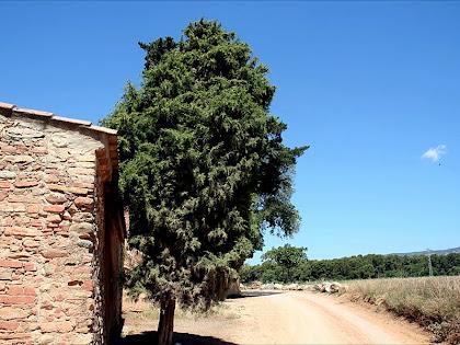 Ginebró de Can Plantada. Autor: Carlos Albacete