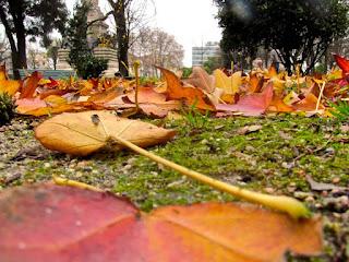 As Folhas e a Cidade do Porto