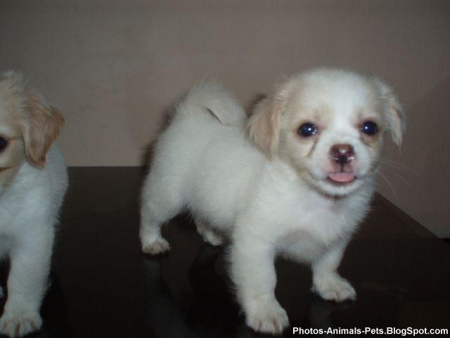 http://4.bp.blogspot.com/-CwGlHecUJIk/TY3Z-jfOiMI/AAAAAAAAAPU/SRTAK1ZfVtg/s1600/Photos%2B-puppy%2Bdogs_0003.jpg
