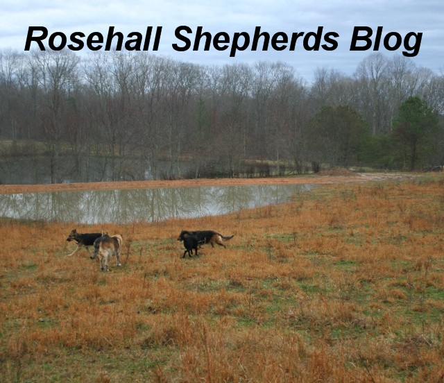 The Rosehall Shepherds blog