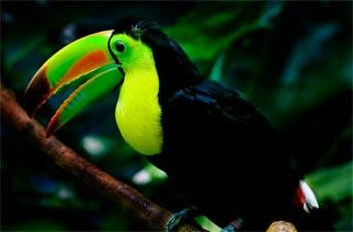 Belize Salah Satu Negara Teromantis Di Dunia