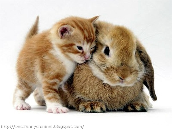 Cute bunny and kitty.