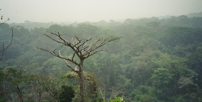 Rainforest Congo