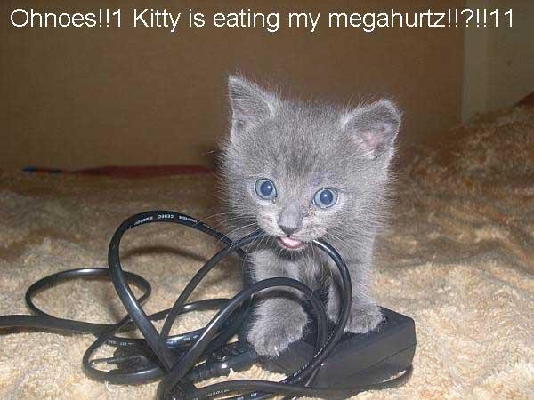 Kitten Quote Funny Cat