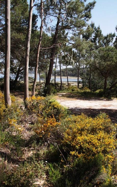 a proximidade da água e a multiplicidade botânica