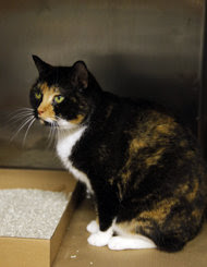 NEW YORK (AP) — A calico cat named Willow, who disappeared from a home near the Rocky Mountains fiv