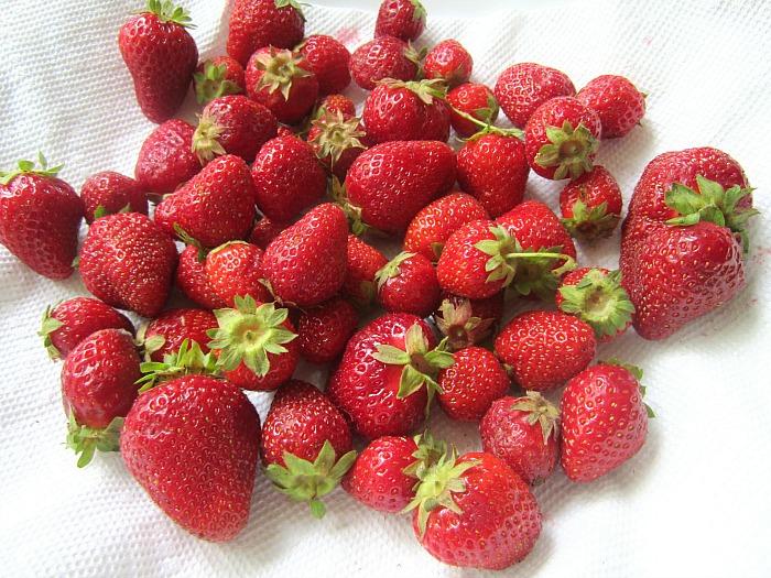Stacey Snacks: Strawberry Basil Shortcakes w/ Mascarpone Cream