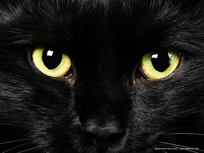 Black Cat Yellow Eye Wallpaper