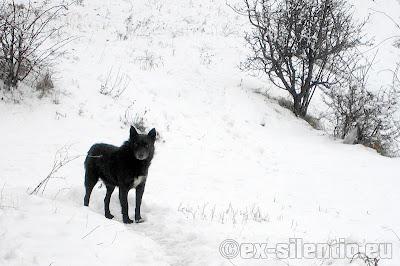 peisaje de iarna - catel in zapada