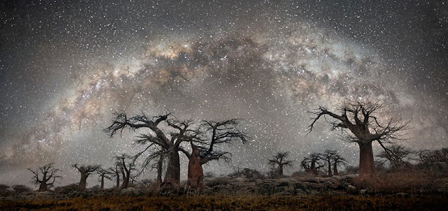 oldest trees beth moon diamond nights photography-4