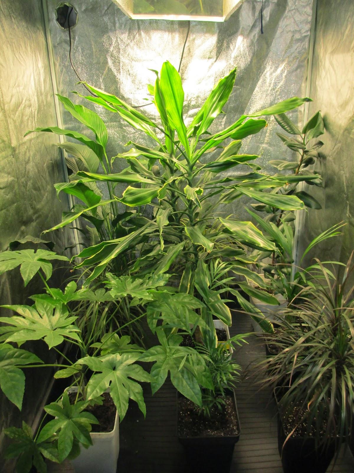 La mar de verde plantas purificadoras de aire hogares Plantas limpiadoras de aire
