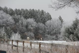 photo of rural hoar frost