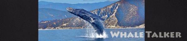 whale talker