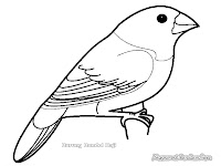 Mewarnai Gambar Burung Bondol Haji