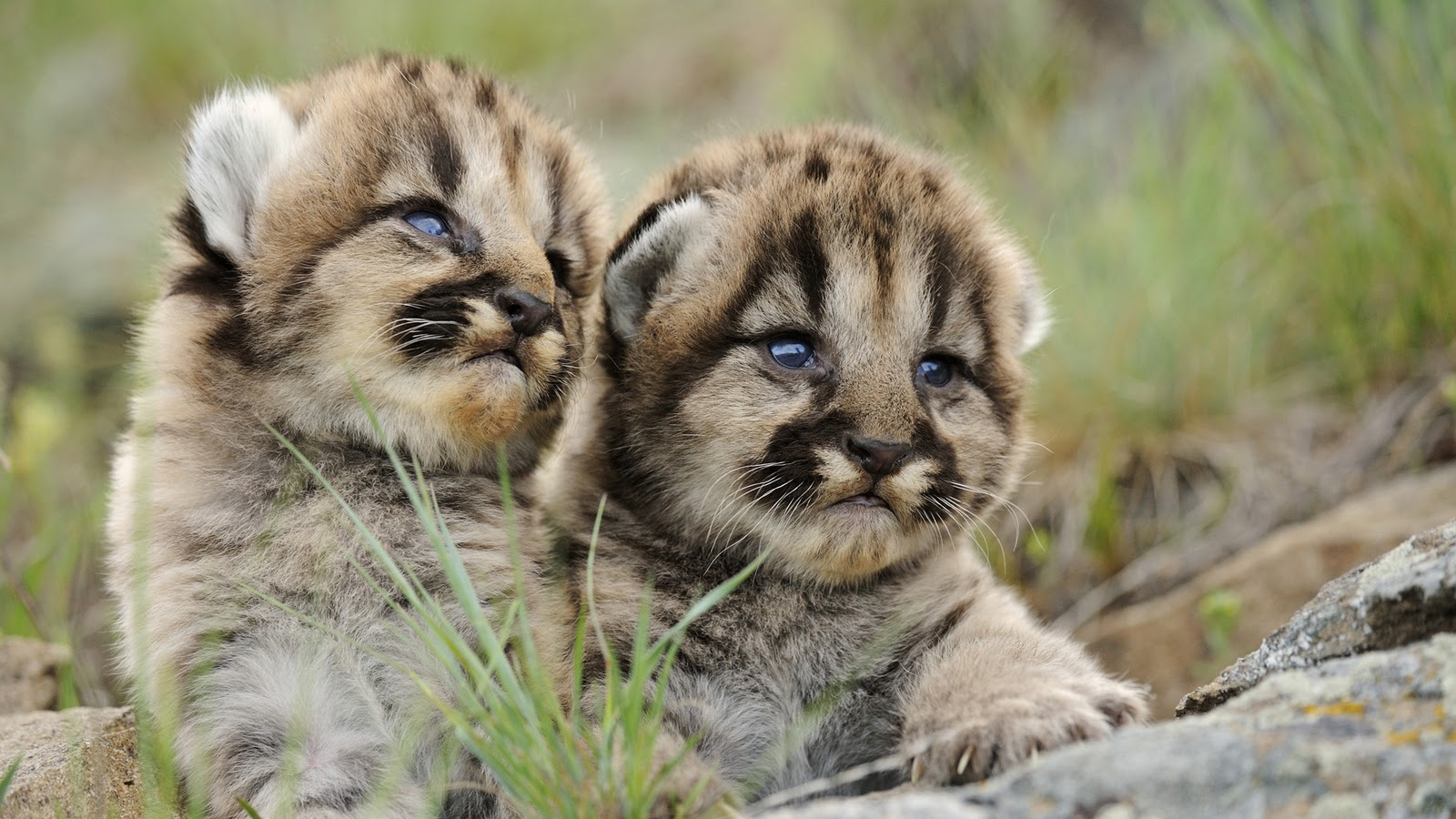 Pets World: Cute Animals HD Photos