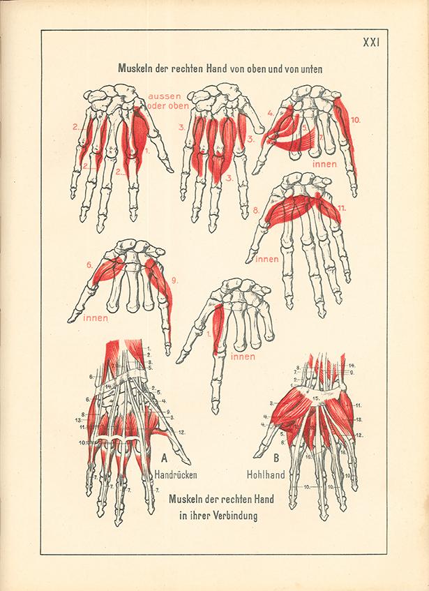 Fantastisch Hand Anatomie Für Künstler Ideen - Anatomie Ideen ...