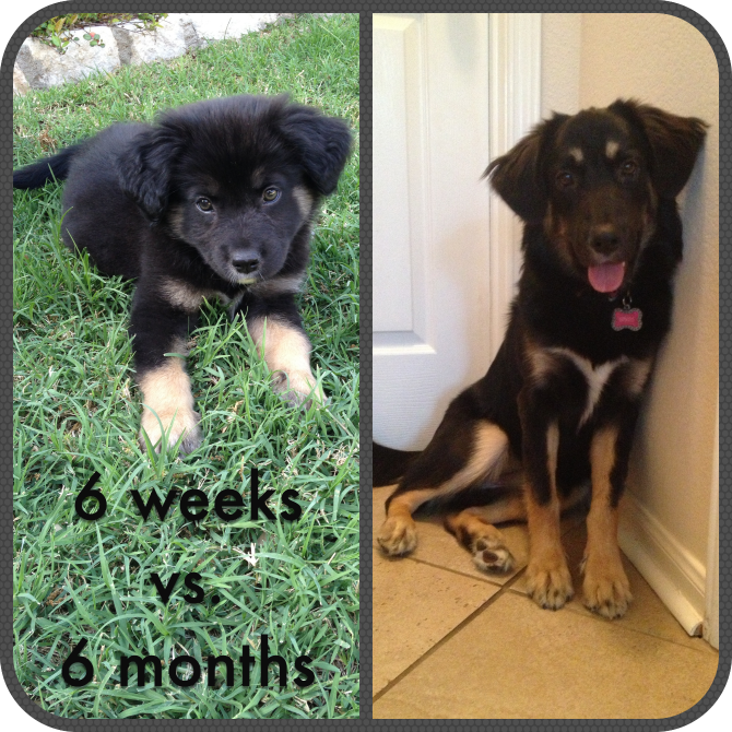 The Holland House: Brees at 6 months