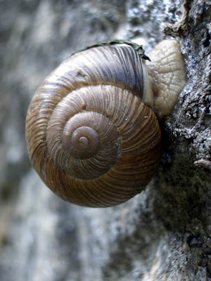 Factors to Consider When Choosing A Snail Farming Site