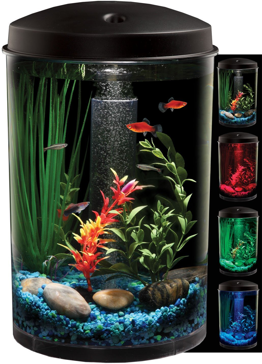 Globe Aquarium : The globe aquarium is simple and combines beauty with ...